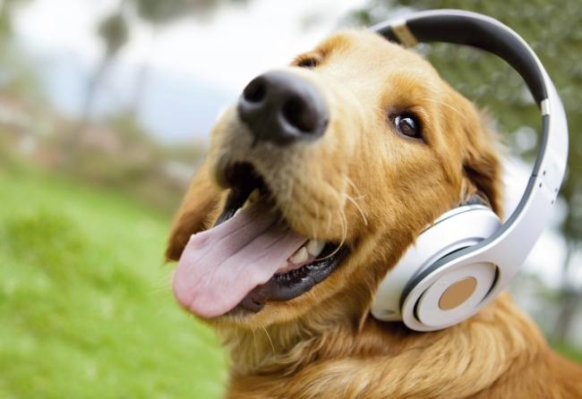 perro escuchando música
